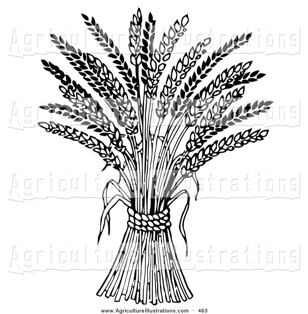 Wheat outline clipart picture freeuse stock Free Wheat Clipart outline, Download Free Clip Art on Owips.com picture freeuse stock