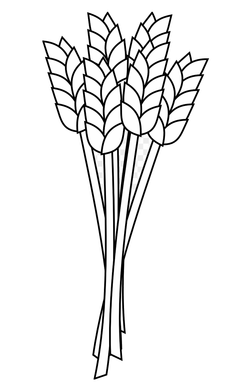 Wheat outline clipart clipart transparent library Wheat Freeuse Stock Flour Coloring Book Clipart Outline ... clipart transparent library