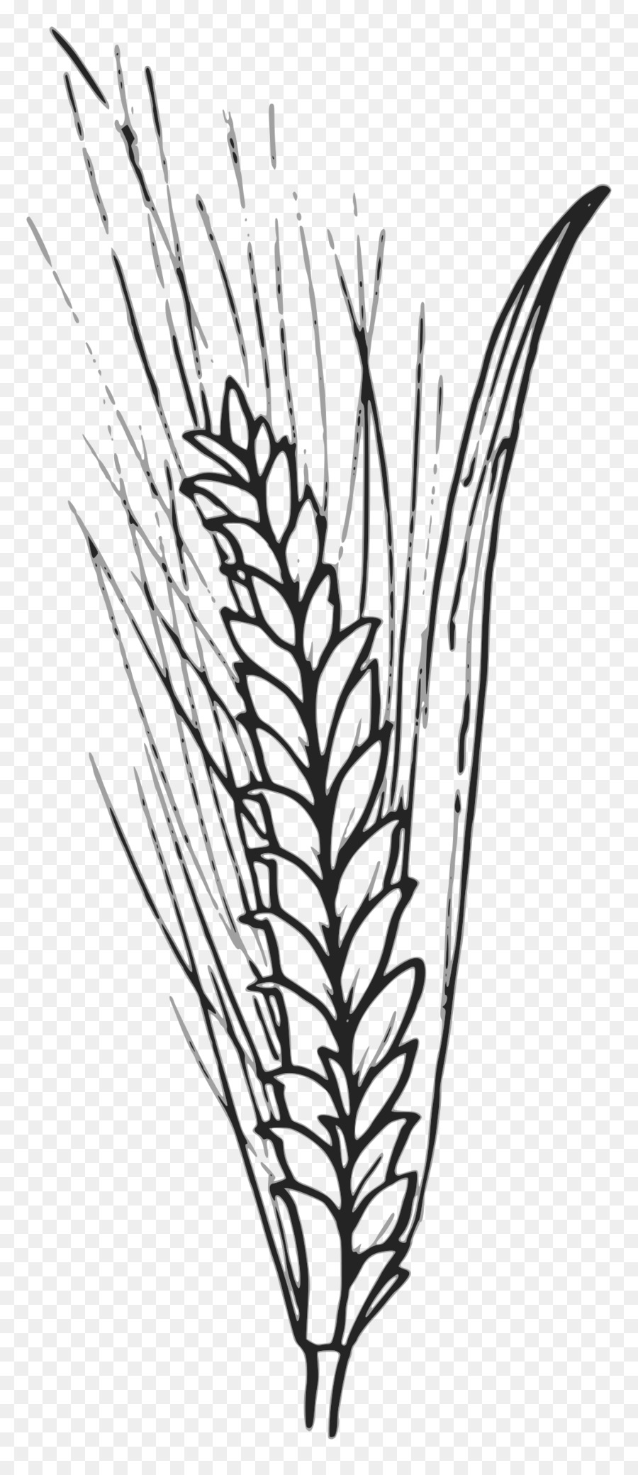 Wheat outline clipart library Family Tree Background clipart - Wheat, Plant, Leaf ... library