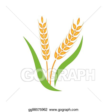 Wheat spike clipart download Vector Clipart - Wheat barley spike yellow isolated on white ... download