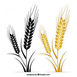 Wheat stalk clipart picture library Free Clipart Of Wheat Stalks   Free Images at Clker.com ... picture library