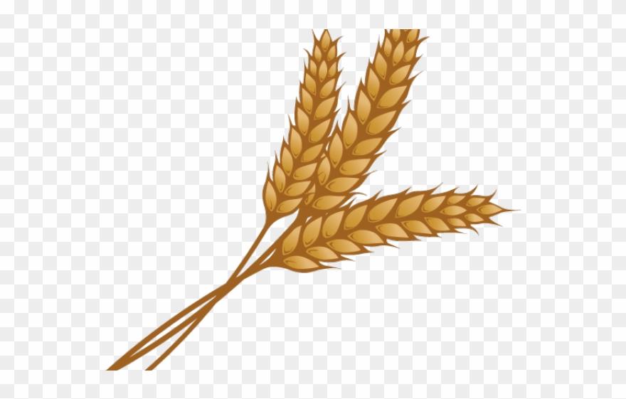 Wheat stalk clipart clip art royalty free Wheat Clipart Single Piece - Wheat Clipart - Png Download ... clip art royalty free
