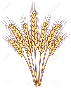 Wheat stalk clipart clip art black and white Stalks Of Wheat Clipart   Free Images at Clker.com - vector ... clip art black and white