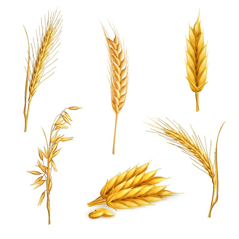 Whole grain free clipart clip art royalty free stock Wheat Stalk Free Clipart | bakery | Wheat vector, Wheat ... clip art royalty free stock
