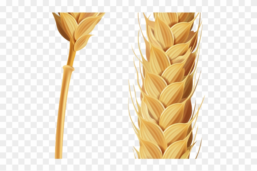 Wheat stalk clipart jpg freeuse download Wheat Clipart Transparent Background - Stalk Of Grain ... jpg freeuse download
