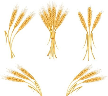 Wheat strand clipart clipart library Collection of Wheat clipart | Free download best Wheat ... clipart library