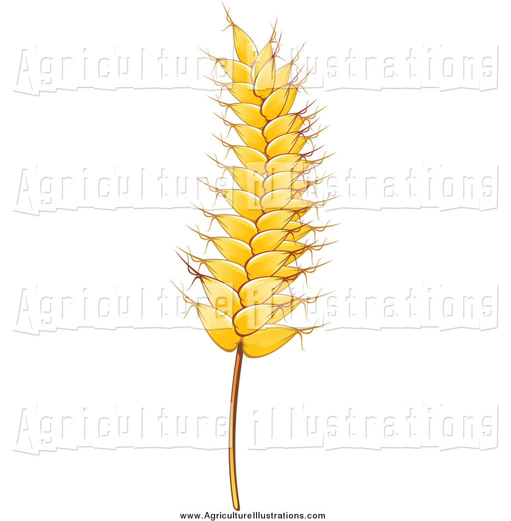 Wheat strand clipart vector Agriculture Clipart of a Gold Strand of Wheat by Vector ... vector