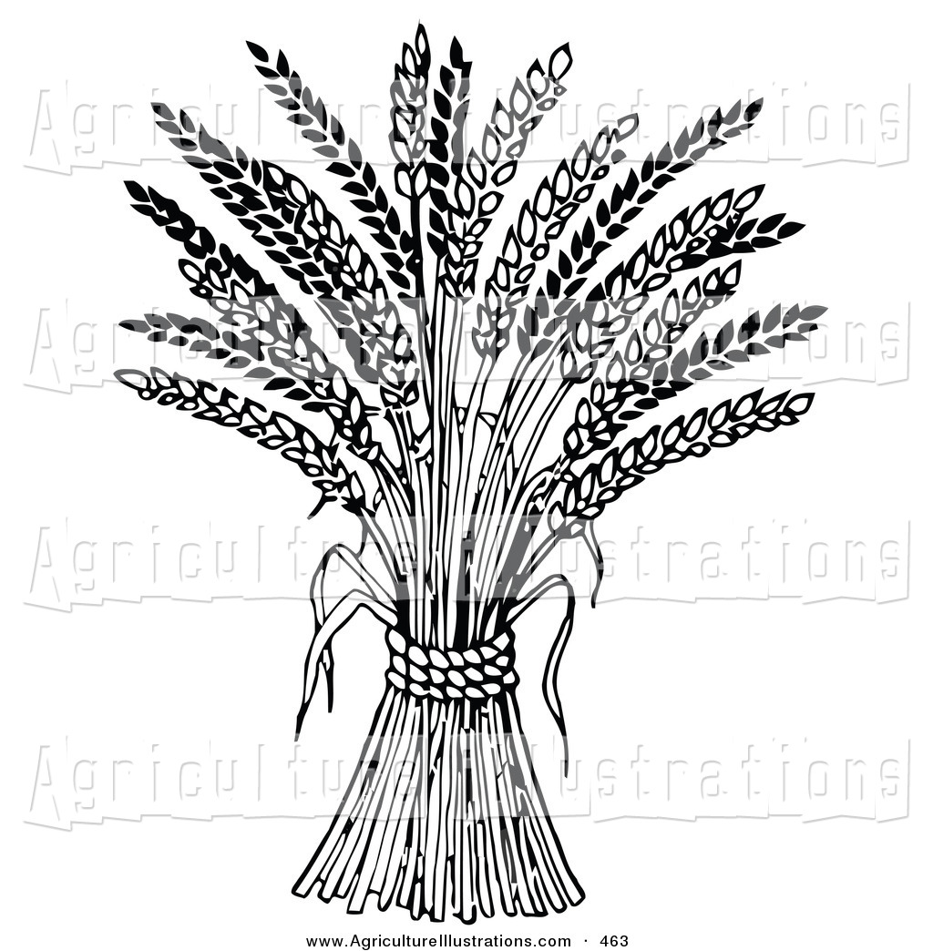 Wheat strand clipart clip transparent Agriculture Clipart of a Wheat Bound by Rope on White by C ... clip transparent