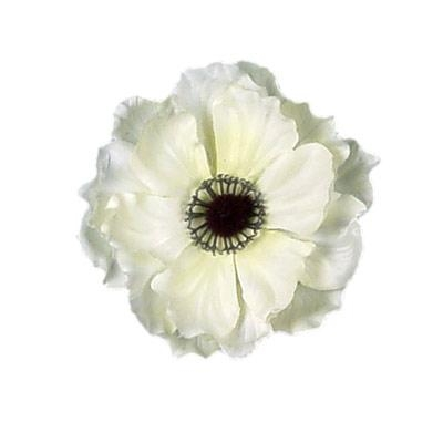 White anemone flower clipart png transparent library Free Anemone Flower Cliparts, Download Free Clip Art, Free ... png transparent library