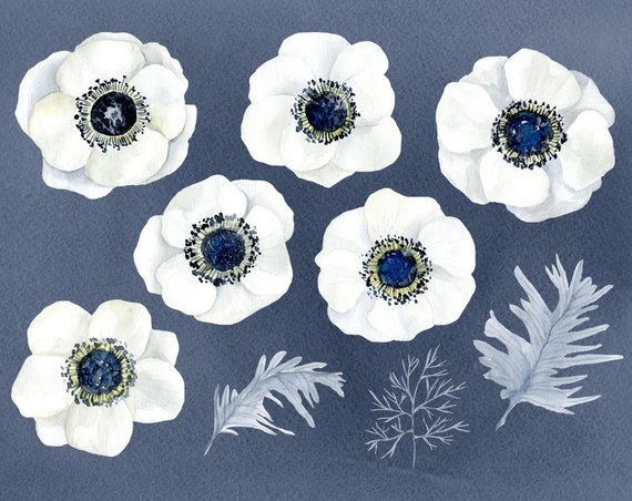White anemone flower clipart picture Watercolor Flowers Clipart White Anemone Aquarelle Digital ... picture