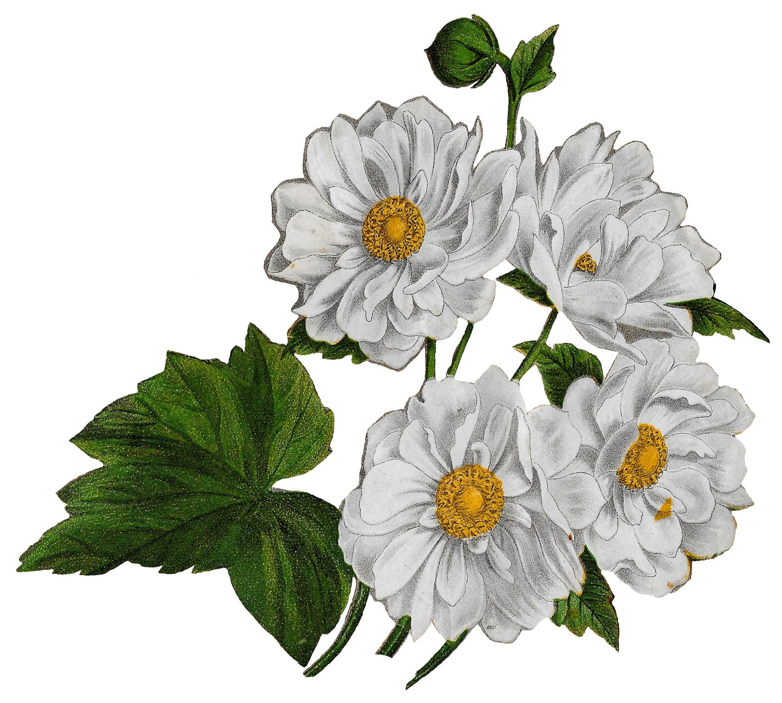 White anemone flower clipart clip art black and white download The Graphics Monarch: Printable Flower Anemone Floral Clip ... clip art black and white download