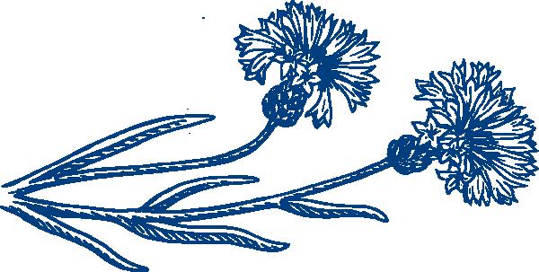 White blue cornflower clipart