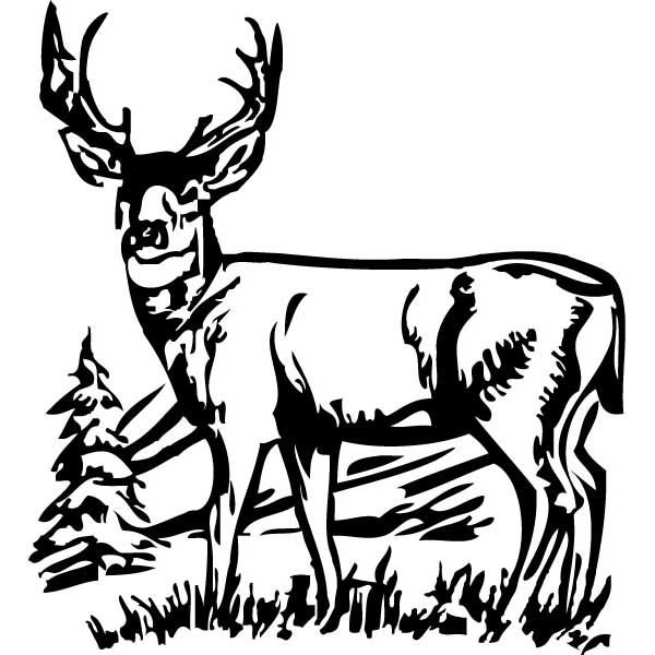 White buck clipart clipart free Deer Black And White | Free download best Deer Black And ... clipart free