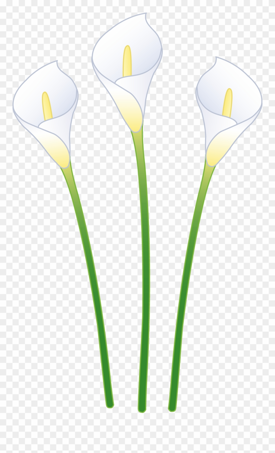White calla lily clipart clip art library stock Calla Lily Clipart Transparent - Calla Lily Cartoon - Png ... clip art library stock