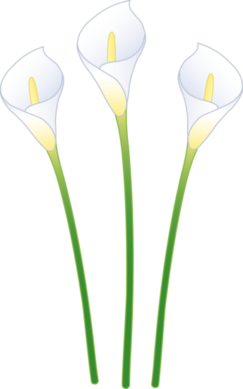 Free calla lily clipart banner black and white library Calla lilies clipart clipart images gallery for free ... banner black and white library