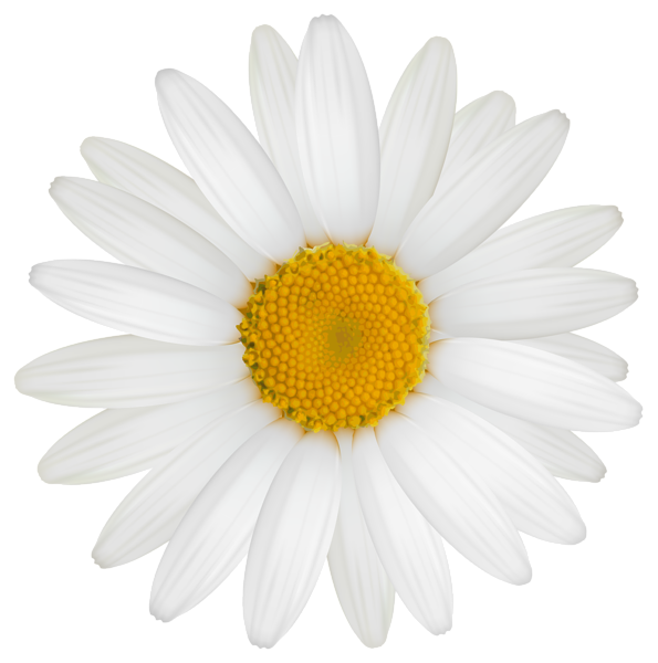 White daisy clipart vector royalty free download Pin by Mary Lou Montella on flowers in 2019 | Daisy image ... vector royalty free download