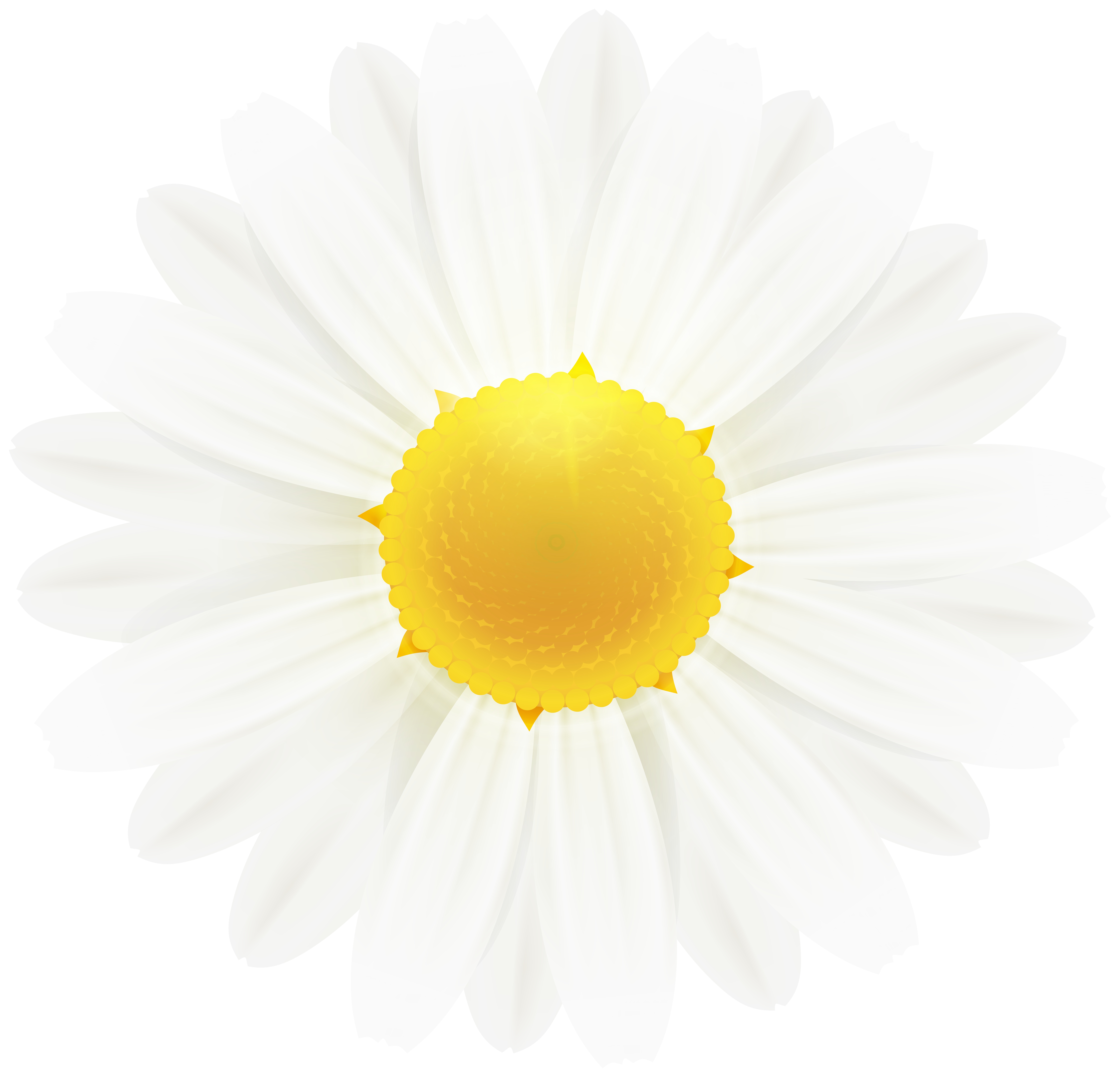White daisy clipart free White Daisy Flower Clipart Image | Gallery Yopriceville ... free