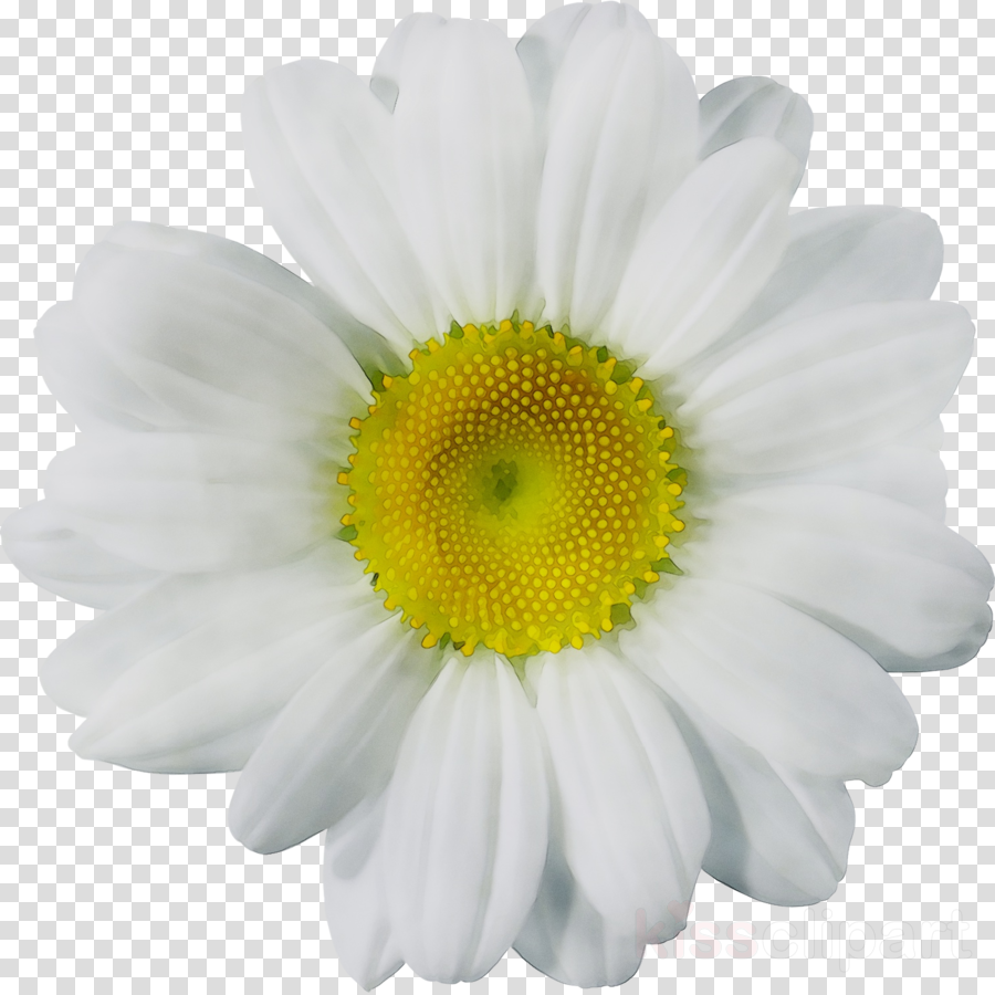 White daisy clipart svg royalty free stock Flowers Clipart Background clipart - Flower, White, Daisy ... svg royalty free stock