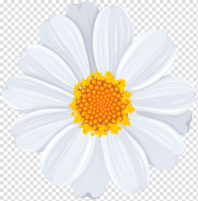White daisy clipart transparent background image free download White and yellow petaled flower , Common daisy , White Daisy ... image free download