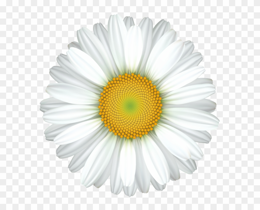 White daisy clipart transparent background banner black and white library Daisy Flower Transparent Clip Art Image - Clipart White ... banner black and white library