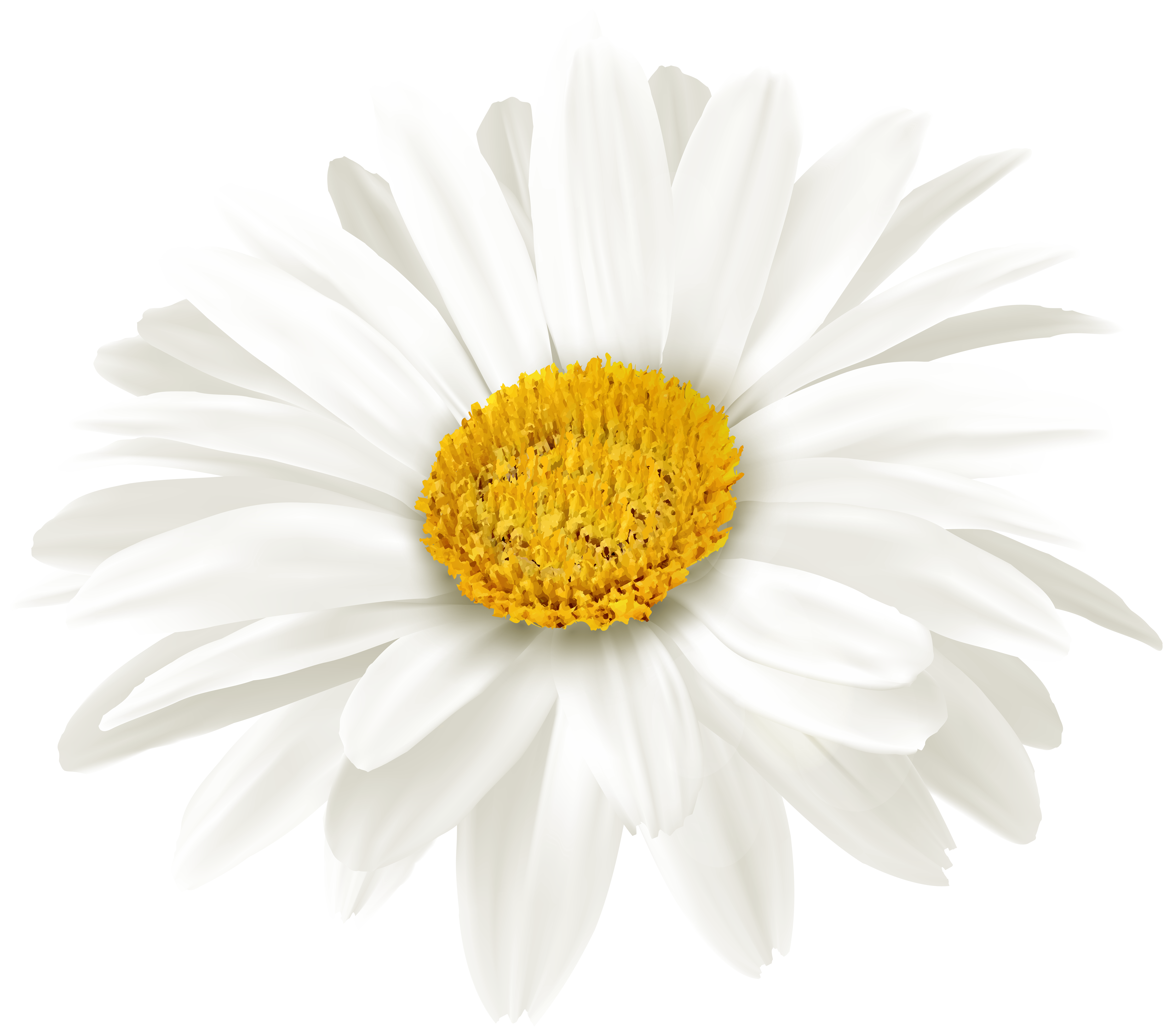 White daisy flower clipart clipart White Daisy Flower PNG Clipart | Gallery Yopriceville ... clipart