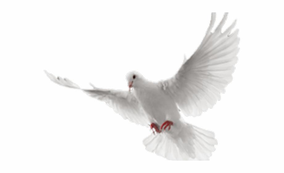 White dove in flight clipart svg transparent White Dove Clipart In Flight - Paloma Blanca En Png - white ... svg transparent