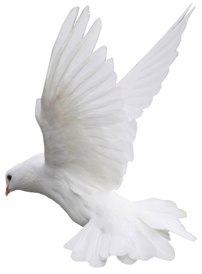 White dove in flight clipart svg library stock White Dove Flight PNG Clipart   Gallery Yopriceville - High ... svg library stock