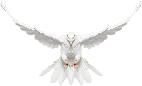 White dove in flight clipart clipart freeuse stock White Dove in Flight Free Clip-art   Gallery Yopriceville ... clipart freeuse stock