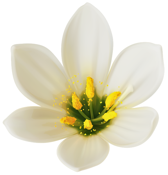 White flower clipart png clipart free stock White Flower PNG Clipart Image clipart free stock