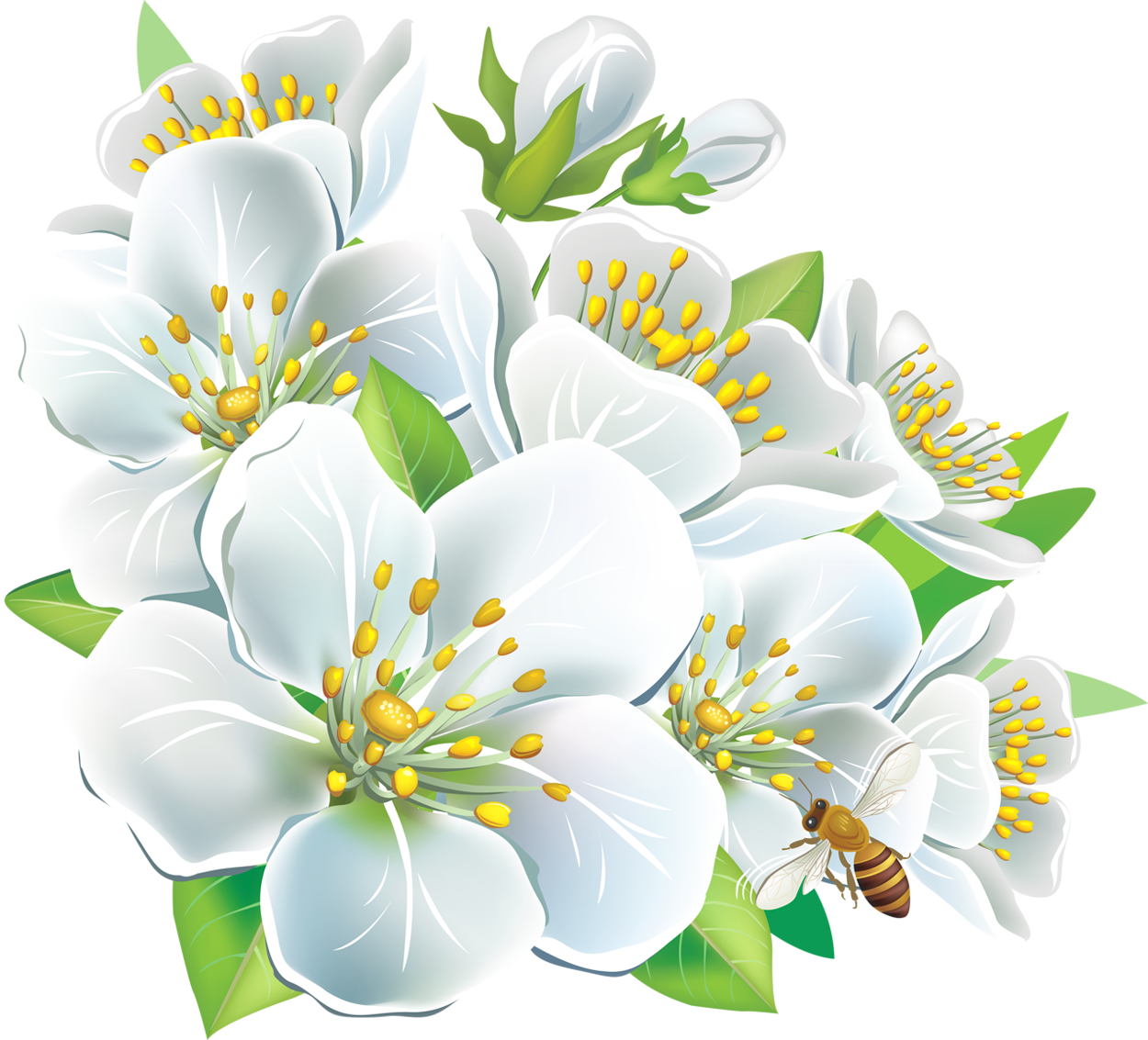 Flower clipart wallpaper clipart freeuse library Large White Flowers PNG Clipart clipart freeuse library
