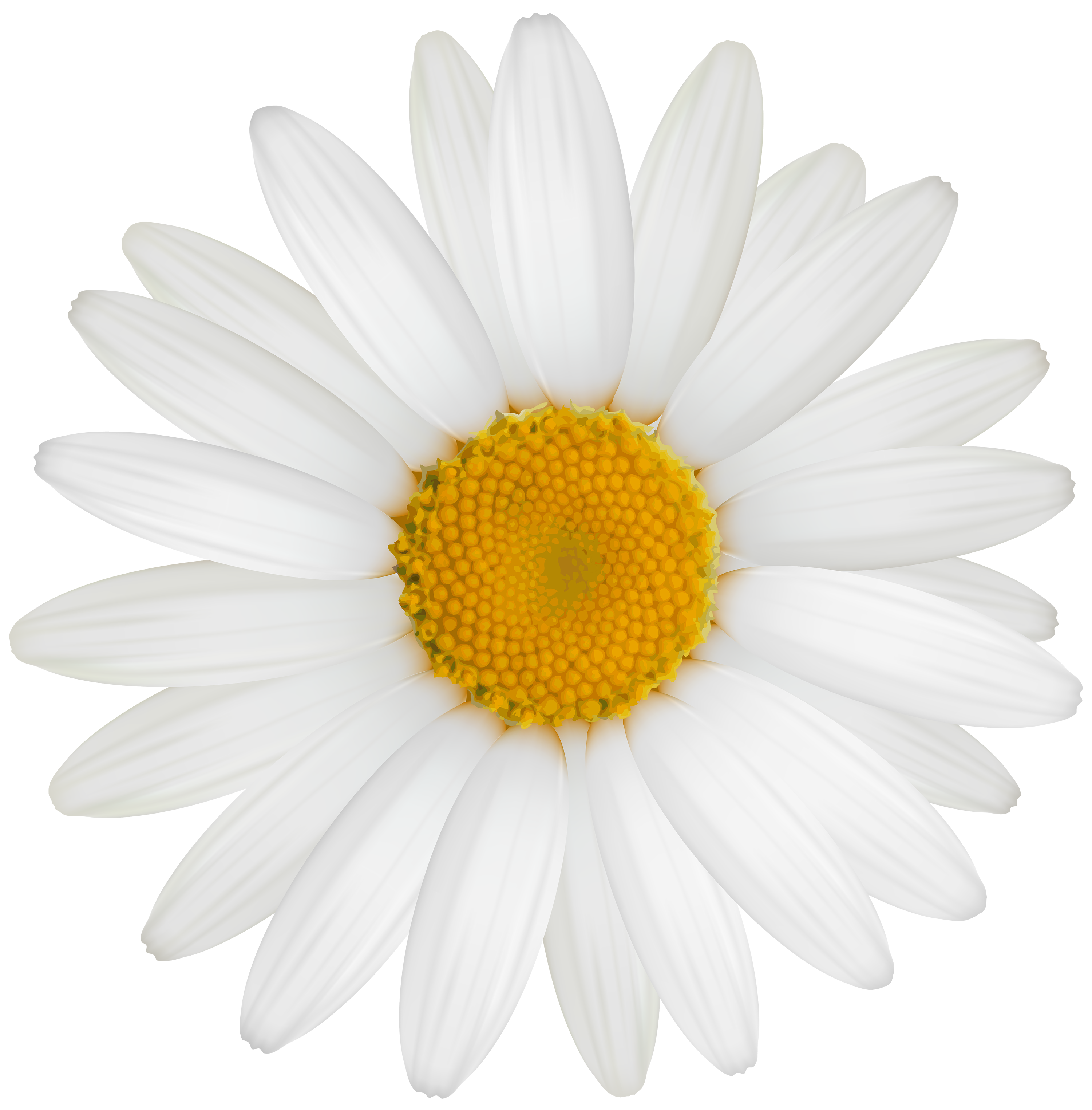 White flower clipart png vector free stock White Daisy PNG Clipart - Best WEB Clipart vector free stock