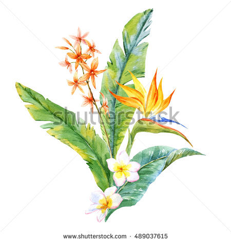 White flower green center watercolor clipart png clip Plumeria Stock Images, Royalty-Free Images & Vectors | Shutterstock clip