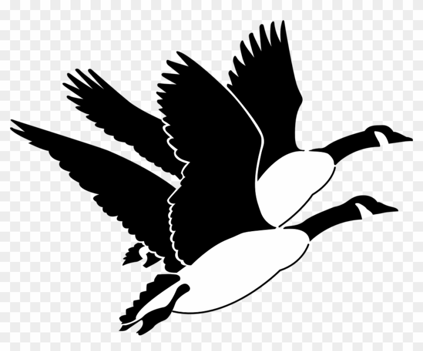 White gander clipart image library library Goose Clipart Gander - Flying Geese Clipart, HD Png Download ... image library library