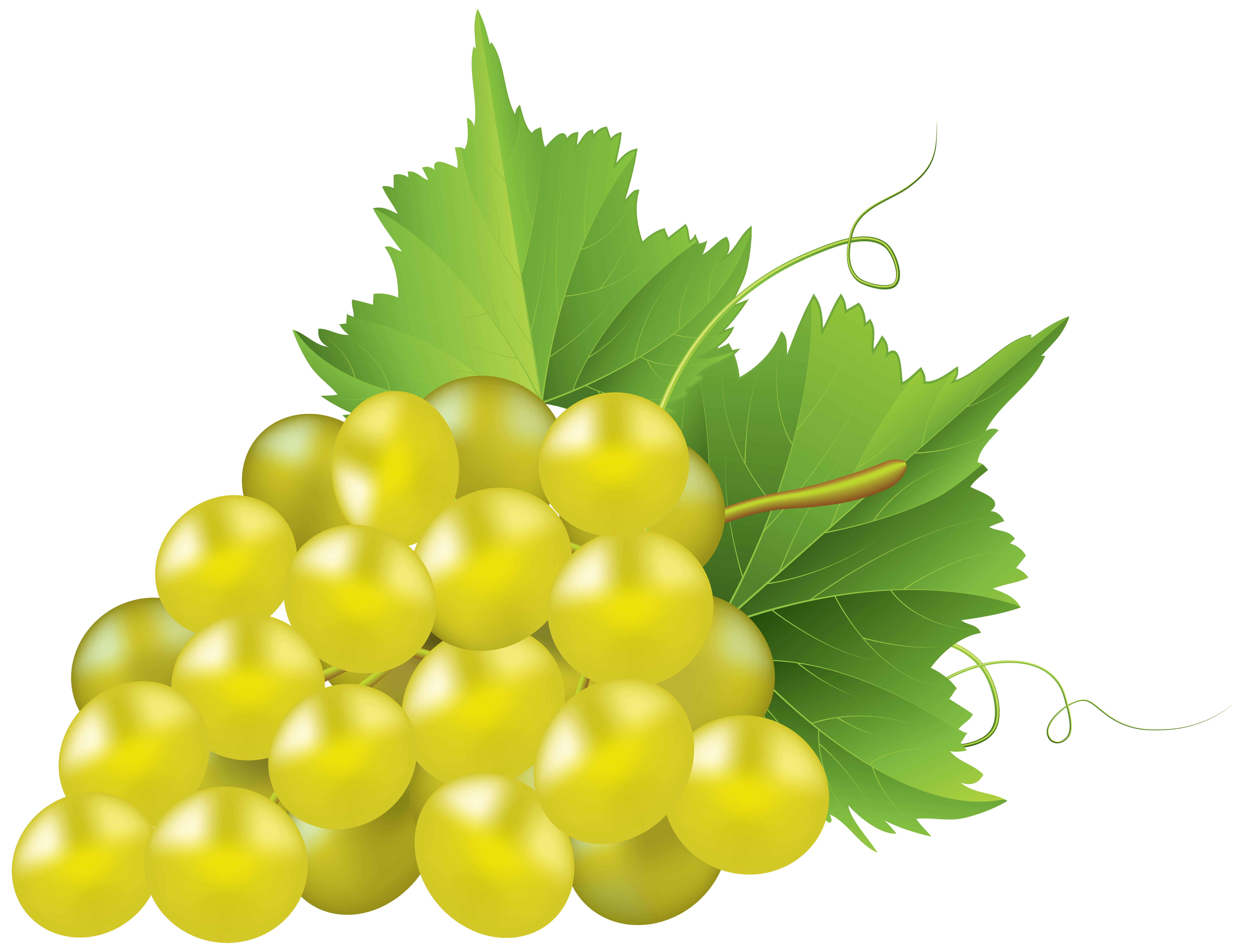White grapes clipart clip free library White Grape Transparent PNG Clip Art Image | Gallery ... clip free library