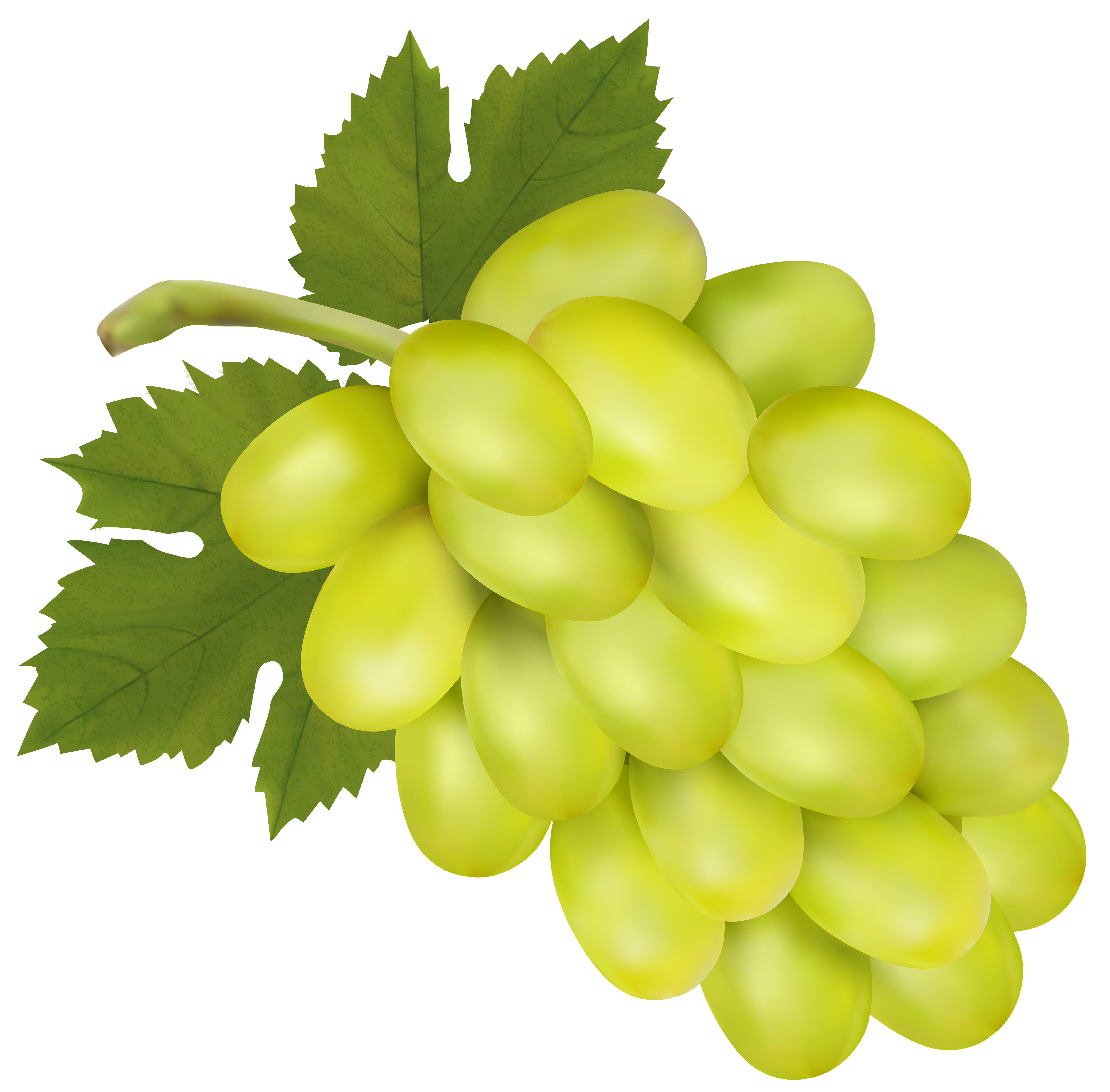 White grapes clipart vector transparent download White Grape PNG Clip Art Image | Gallery Yopriceville ... vector transparent download