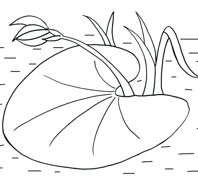 White lily pads clipart banner library library Lilypad Drawing at PaintingValley.com | Explore collection ... banner library library