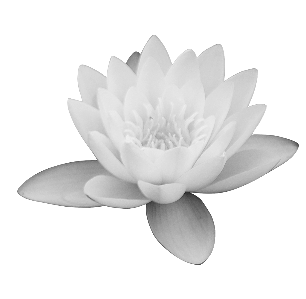 White lotus flower clipart clip art library download Lotus Flower PNG images free download clip art library download