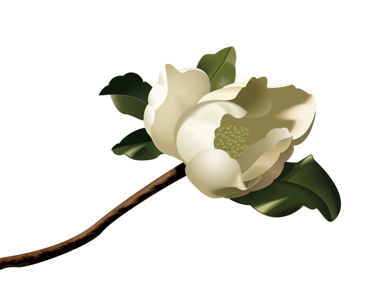 White magnolia clipart free stock Free Magnolia Cliparts, Download Free Clip Art, Free Clip ... free stock