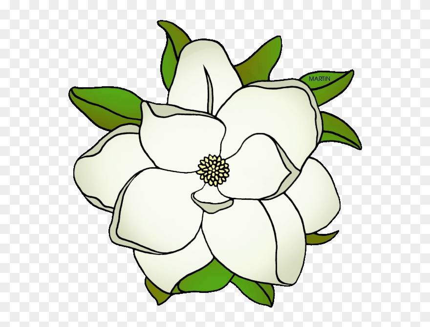 White magnolia clipart image free download State Flower Of Mississippi - Magnolia Flowers Clipart Black ... image free download