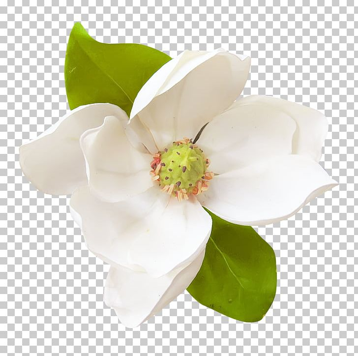 White magnolia clipart clipart freeuse library Flower Magnolia PNG, Clipart, Cape Jasmine, Clip Art, Cut ... clipart freeuse library