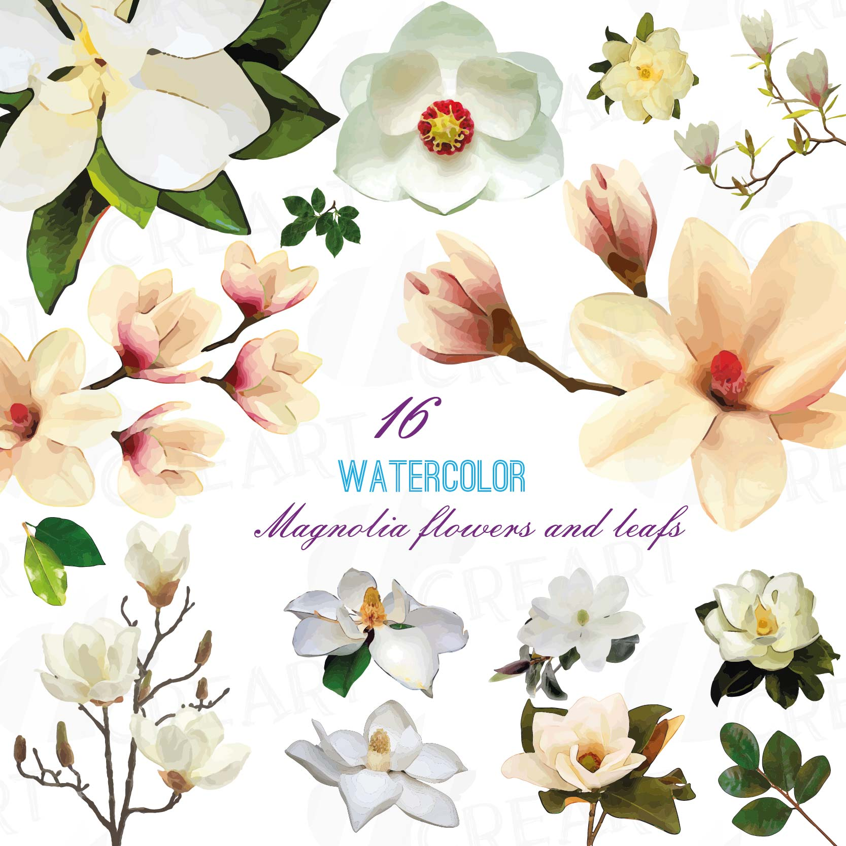 White magnolia clipart image royalty free download Watercolor white Magnolia flowers and leafs clip art pack, magnolias clip  art. PNG, jpg, svg, vector illustrator & corel files included image royalty free download