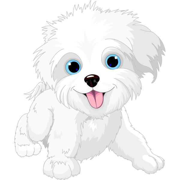 White maltese dog clipart