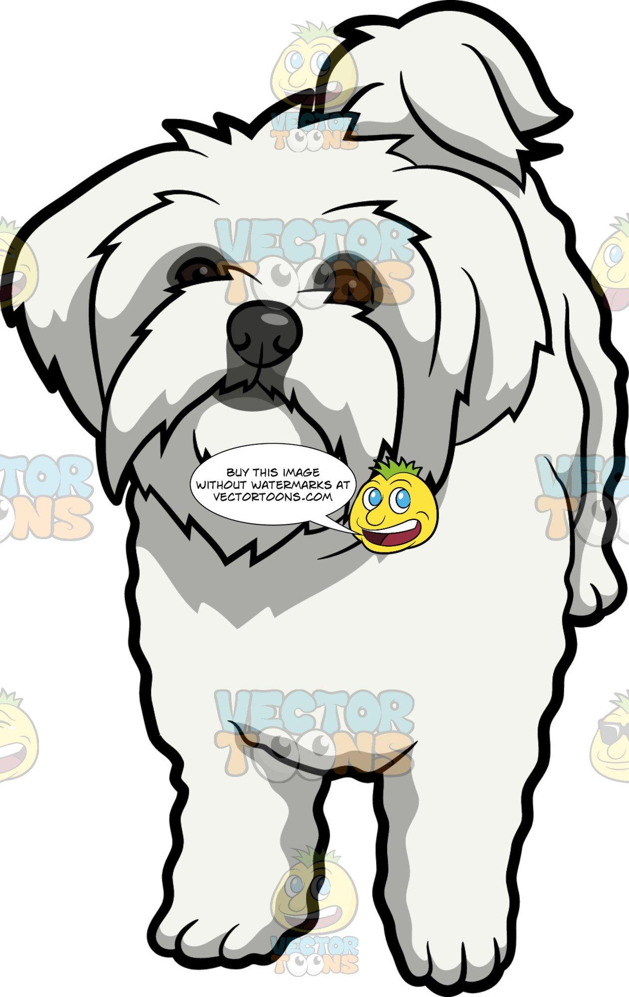 White maltese dog clipart clip art black and white stock An Intrigued Maltese Dog clip art black and white stock