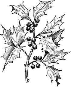 White mistletoe clipart royalty free library mistletoe clipart black and white - Clip Art Library royalty free library
