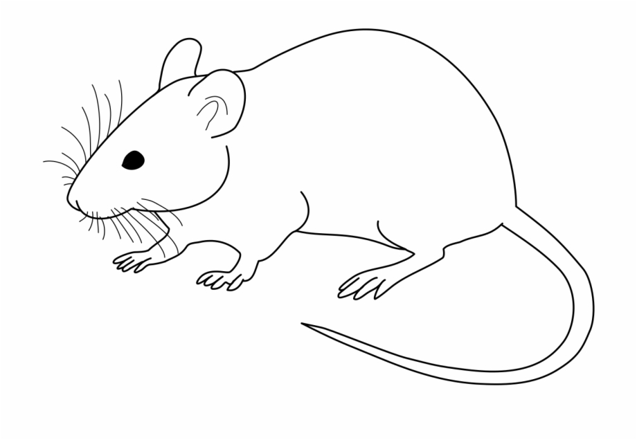 White mouse clipart png image free Vector Diagram Of Laboratory Mouse - Mouse Vector Black And ... image free