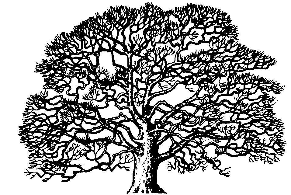 White oak clipart clip art free stock Oak Tree Clip Art Oak Tree Clip Art Black White Oak Tree Oak ... clip art free stock
