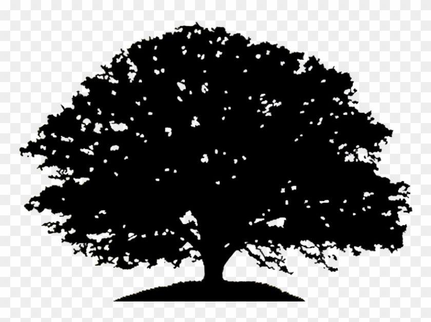 White oak clipart svg royalty free library Pin by Pongsathast Jiraprasertsuk on Tree | White oak tree ... svg royalty free library