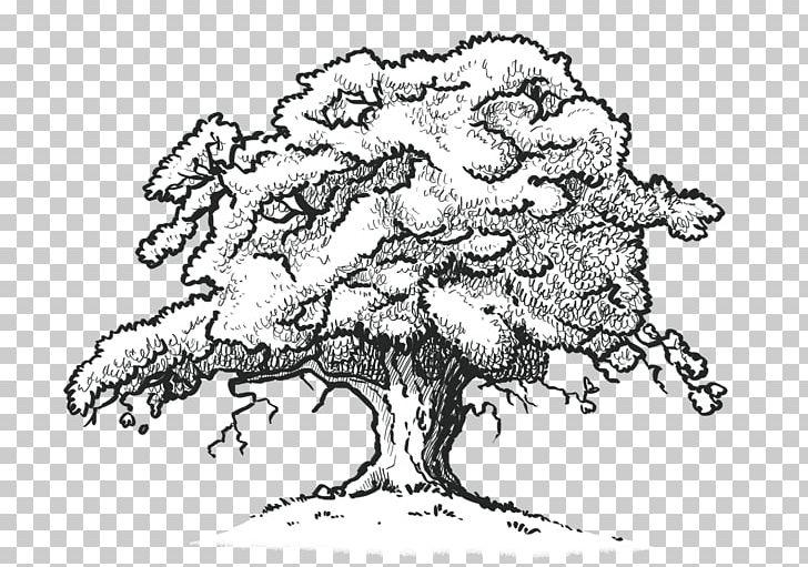 White oak clipart clipart free library Northern Red Oak White Oak Drawing Tree Desktop PNG, Clipart ... clipart free library