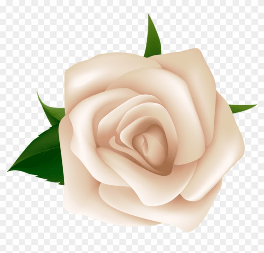 White rose png clipart jpg library download Free Png Download White Rose Png Images Background - Clip ... jpg library download