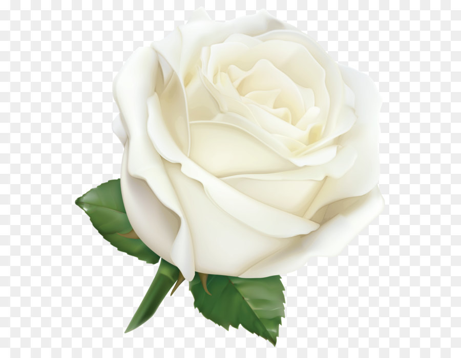 White rose png clipart image transparent library White Rose Png & Free White Rose.png Transparent Images ... image transparent library